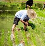 小型气象站在农业种植方面的应用